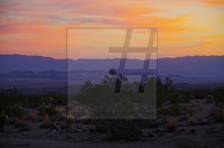 #joshua tree & big bear lake – 013 Kopie