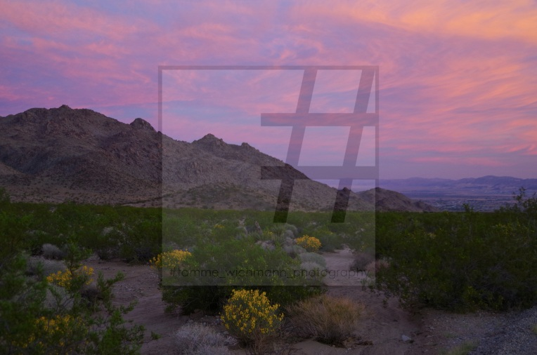 #joshua tree & big bear lake – 017 Kopie
