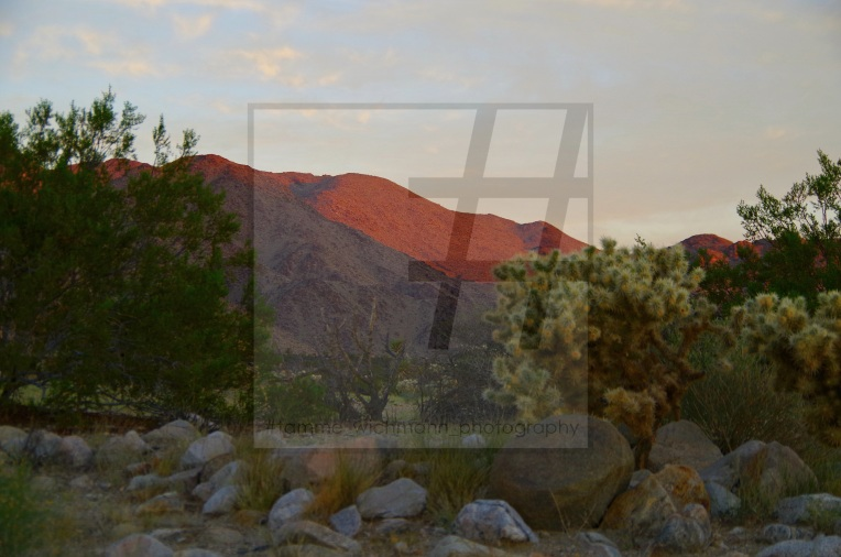 #joshua tree & big bear lake – 023 Kopie