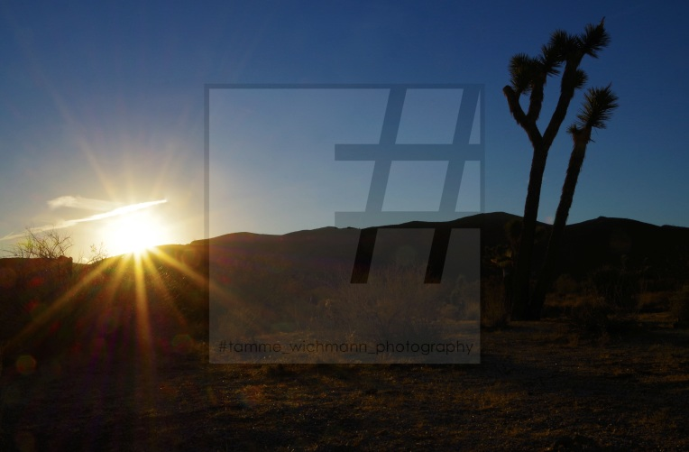 #joshua tree & big bear lake – 039 Kopie