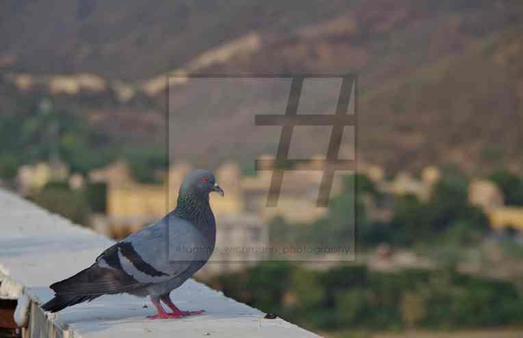 #jaipur – 012 Kopie