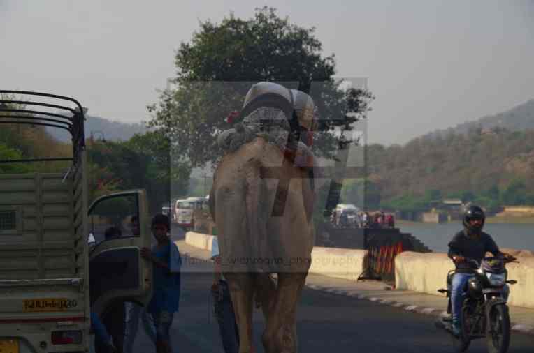 #jaipur – 151 Kopie