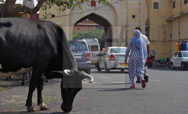 #jaipur – 219 Kopie